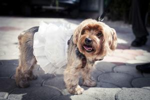 Anteprima 2 Special Guests Pets in a wedding